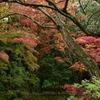 多摩御陵の紅葉②
