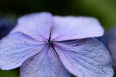 一輪の花として