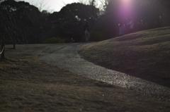 夕方の公園散歩