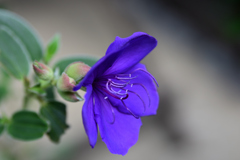紫紺の美学