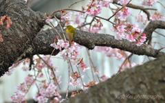 Spring pleasure