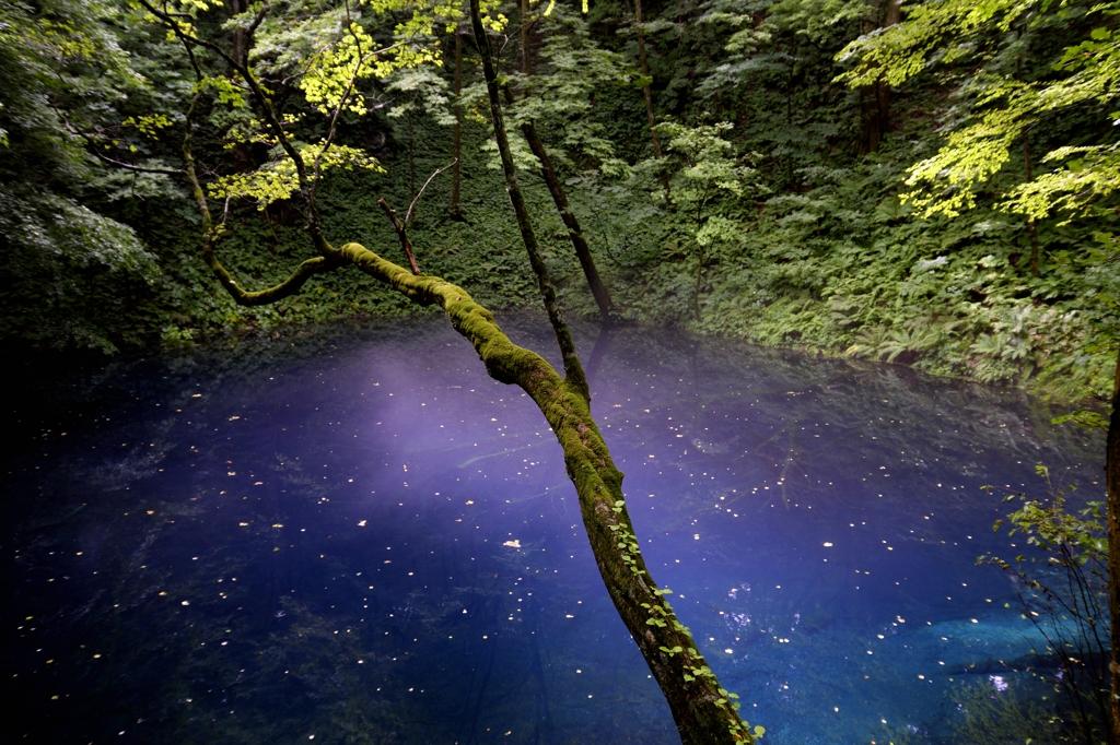 白神山地 十二湖 By Kkatsu Id 3699911 写真共有サイト Photohito