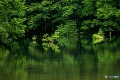 賑やかな水没林