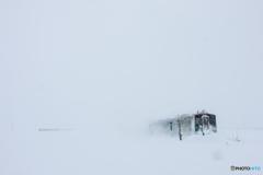 雪原を疾走