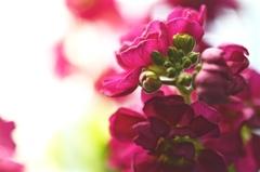 春色パレット