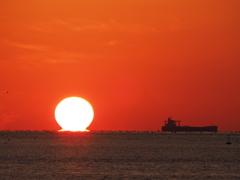 今季初ダルマ 播磨灘 20201018