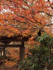 里の秋 金剛寺 三木