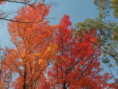 奥須磨公園 神戸