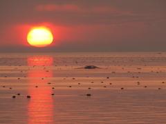 網の下を潜ります もぐり船(海苔養殖)