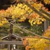 里の秋 常楽寺 加古川