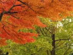 紅葉 明日香