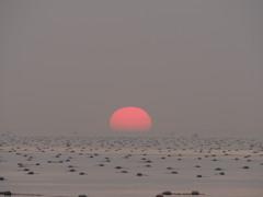 ダルマにならず 播磨灘 20180311