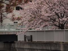 深川界隈の橋 木更木橋