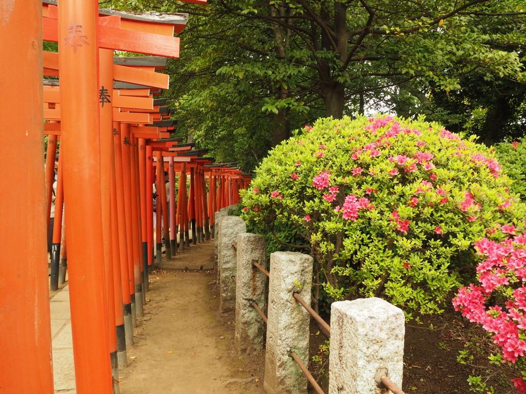 根津神社1 文京区