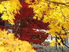 須磨寺3 神戸