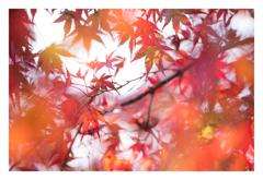 紅葉 2016 (嵐山)
