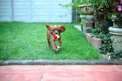 庭の極小ドッグラン