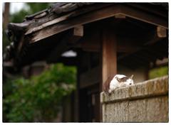 「夏日の前に」小江戸川越散歩463
