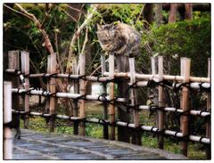 「花冷えの頃」小江戸川越散歩462