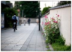 「こころはどこに」小江戸川越散歩466
