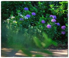 「夏が来る頃。」小江戸川越散歩257