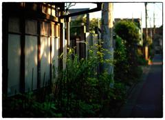 「屁理屈」小江戸川越散歩299