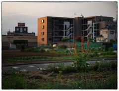 「立葵の咲く頃」小江戸川越散歩468