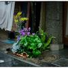 「商店街の花」小江戸川越散歩399