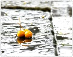 「銀杏の思い出」小江戸川越散歩199