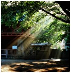 「朝の光」小江戸川越散歩01
