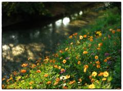 「ファインダー越し」小江戸川越散歩297