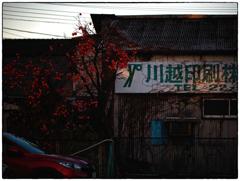 「柿の色」小江戸川越散歩215