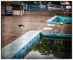 「プールサイドの猫」小江戸川越散歩467