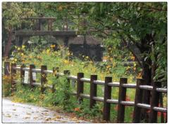 「霧雨」 小江戸川越散歩198