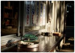 「十月の蝉」 小江戸川越散歩202