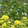 もうすぐ春 野の花