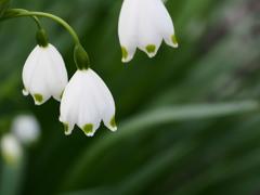 散歩道の春の花