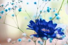 ガーベラの咲く窓辺