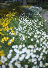 お花の咲いた小径