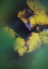 物置小屋の陰の秋