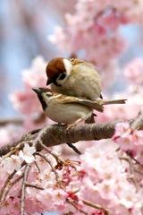 春だねぇ〜♪