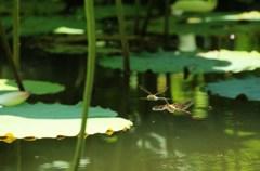 蓮池のペア