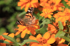 翅の色は花の色