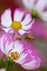ミツバチさん 秋の収穫祭2