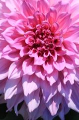広がりゆく花色