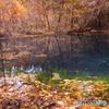 Late autumn ~ Maruikesama