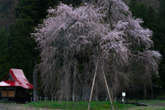 Oshirasama