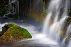Moss rainbow