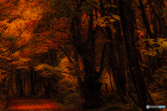 Image ~ Forest of the late fall