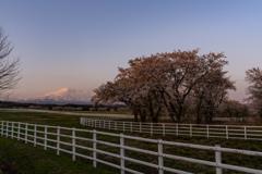 Ranch morning